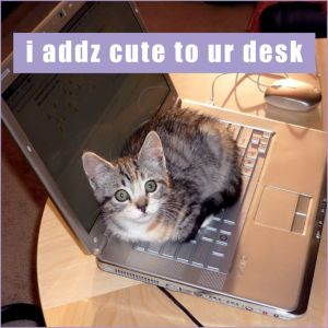I Adds Cute Lolcats Magnet