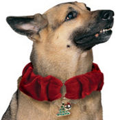 Red Christmas Dog Collar XSmall/Small
