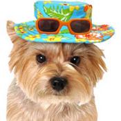 Blue Hawaiian Dog Hat
