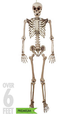 Life-Size Jointed Skeleton