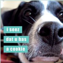 U Has A Cookie Loldogs Magnet
