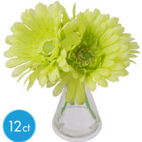 Green Gerbera Daisies in Vases 12ct