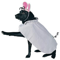 Mouse Dog Costume